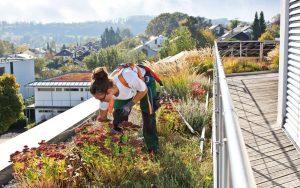 Henke Dachdeckerei | Zimmerei | Solartechnik für Stadthagen - ZinCo Absturzsicherung für das Gründach