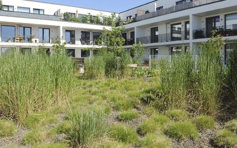 Henke Dachdeckerei | Zimmerei | Solartechnik für Stadthagen - Vielfältige Dachbegrünung - der Garten auf dem Dach